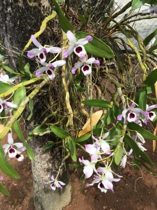 Orquídeas da pousada